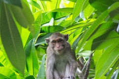Cute monkeys Royalty Free Stock Photo