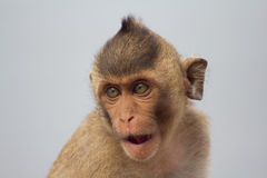 Cute monkeys Royalty Free Stock Images