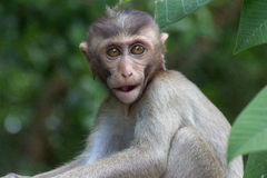 Cute monkeys Stock Images
