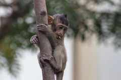 Cute monkeys Stock Photography
