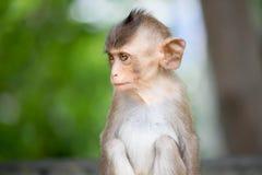 Cute monkeys Stock Photography
