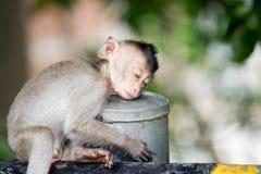 Cute monkeys Royalty Free Stock Image