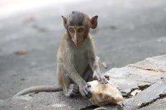 Cute monkeys Royalty Free Stock Photos