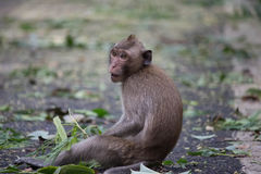 Cute monkeys Royalty Free Stock Photography