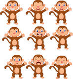 Cute monkeys in various expression Royalty Free Stock Photography