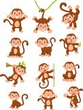 Cute monkeys in various expression Stock Images