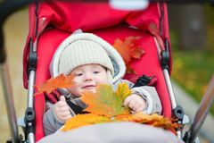 Cute 9 months boy in stroller playing with fall leaves Stock Images