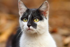 Cute mottled cat Royalty Free Stock Photo