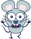 Cute mouse feeling scared stock images