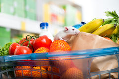 Cute mouse on full shopping cart. Cute white mouse sniffing fresh vegetables in a shopping basket at supermarket Stock Images