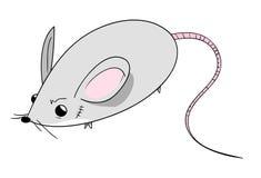 Cute Mouse Stock Photos