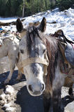 Cute Mule Nature. Stock Photos