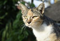 Cute multicolored cat sits alone royalty free stock photos