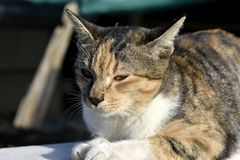 Cute multicolored cat sits alone royalty free stock images