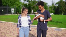 Cute multiethnic couple walking together in park enjoying the day. African boy is holding cute little jack russell stock video footage