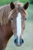 Cute muzzle Stock Images
