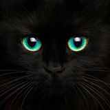 Cute muzzle of a black cat close up royalty free stock photos