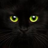 Cute muzzle of a black cat close up stock photos