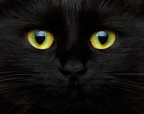 Cute muzzle of a black cat Royalty Free Stock Photography