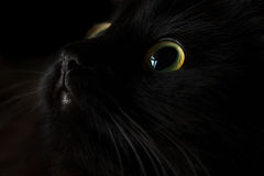 Cute muzzle of a black cat Stock Images
