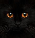 Cute muzzle of a black cat with red eyes. Closeup royalty free stock image