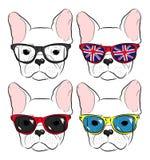 Cute muzzle French Bulldog Royalty Free Stock Images