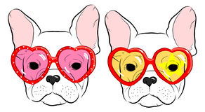 Cute muzzle French Bulldog Stock Images