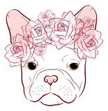 Cute muzzle French Bulldog with a wreath Royalty Free Stock Photos