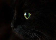 Free Cute Muzzle Of A Black Cat Stock Photography - 68109032