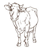 Cute naturalistic cow Stock Photos
