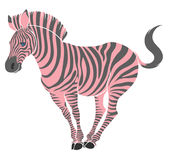 Cute naturalistic zebra with pink stripes in funny pose Stock Photos