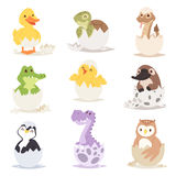 Cute new born animals in eggs easter farm holiday creature little life and young shell small pet nature birthday Stock Image