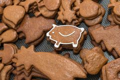 Cute New Year piggy for good luck from Christmas gingerbread stock photography