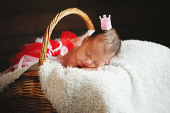 Cute newborn baby in the basket. Photo of cute newborn baby in the basket Royalty Free Stock Images