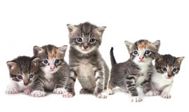 Cute Newborn Baby Kittens Easily Isolated on White Stock Images