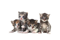Cute Newborn Baby Kittens Easily on White Royalty Free Stock Photography