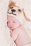 Cute newborn baby sleeps. In a knitted hat dogs stock photos