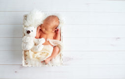 Cute newborn baby sleeps with toy teddy bear in basket Stock Images