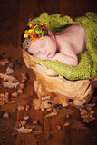 A cute newborn baby in a wreath of cones and berries sleeps on a stub. Royalty Free Stock Photo