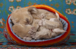 Cute newborn babys lop rabbit lying in a woolen hat Stock Images