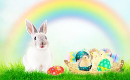Cute newborn Chicks in pink and colorful shell. Green grass, blue sky, rainbow. The concept of the Easter holidays, the birth, royalty free stock photos