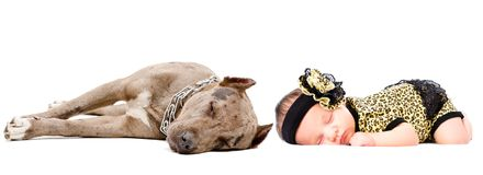 Cute newborn girl sleeping together with her dog a pit bull royalty free stock image