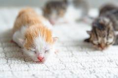 Cute newborn kitten stock images