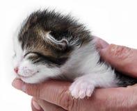 Cute newborn kitten Stock Photos