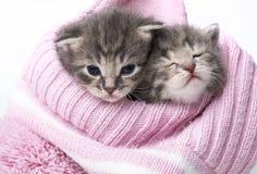 Cute newborn kittens Royalty Free Stock Photo