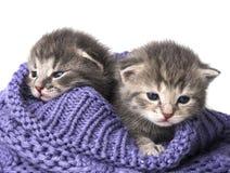 Cute newborn kittens Stock Photos