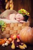 A cute newborn in a wreath of berries and fruits sleeps in a basket. Autumn harvest. Stock Images