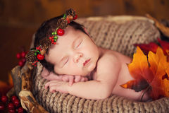 Cute newborn in a wreath of cones and berries in a wooden nest with autumn leaves. Stock Photography