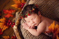 Cute newborn in a wreath of cones and berries in a wooden nest with autumn leaves. Royalty Free Stock Images