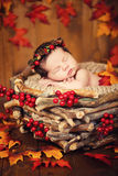 Cute newborn in a wreath of cones and berries in a wooden nest with autumn leaves. Royalty Free Stock Image